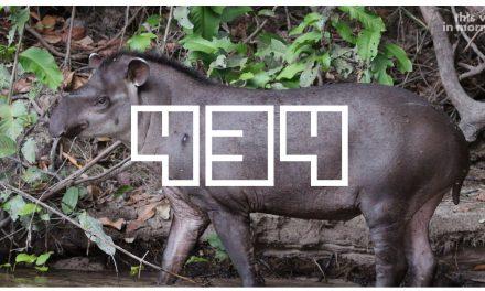 EP 434 – Tapirs! Tapirs, I Say!